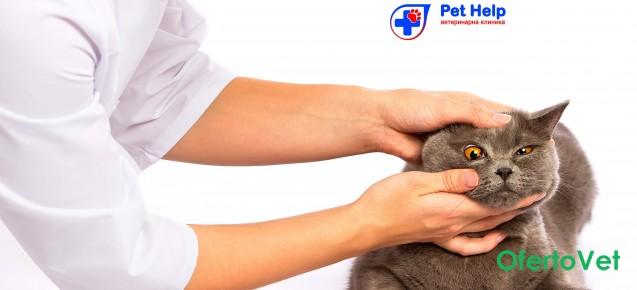 Поставяне на годишна ваксина на котка плюс преглед от Ветеринарна клиника