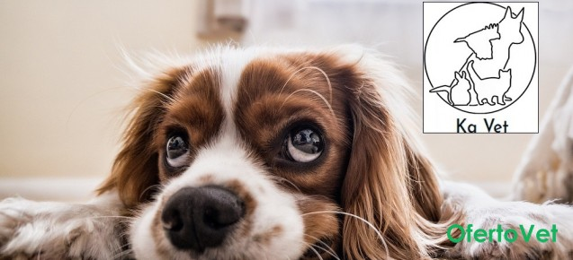Кастрация на мъжко куче от Ветеринарна клиника Ка Вет
