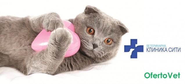 Кастрация/стерилизация на МЪЖКА/ЖЕНСКА котка + венозна анестезия от Ветеринарна клиника СИТИ