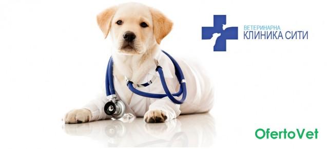 Кастрация на куче + венозна анестезия на цени от 122 лв. от Ветеринарна клиника СИТИ
