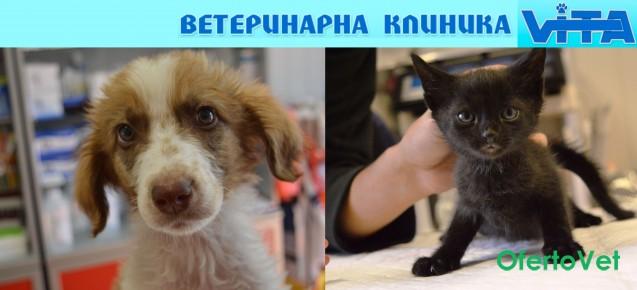 Пълен клиничен преглед за кучета и котки - ваксина, български паспорт + подарък медалъон за 38 лв. от ветеринарен кабинет ВИТА