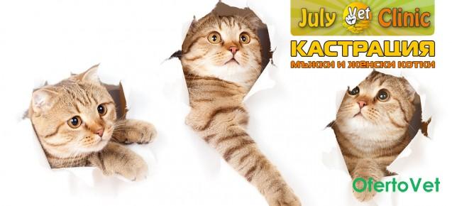 Ранна кастрация/стерилизация на мъжки и женски котки на цени от 70 лв. от ВК ДЖУЛАЙВЕТ 2 Лозенец