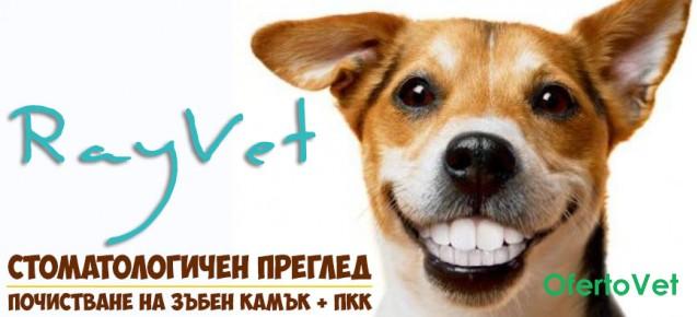 Стоматологичен преглед + почистване на зъбен камък (до втора степен) + ПКК на куче за 50 лв. от Райвет