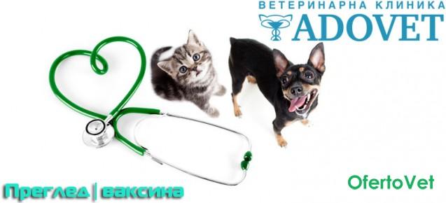 Профилактичен преглед + годишна ваксина за кучета и котки за 27 лв. от ВК Адовет