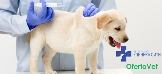 Преглед + годишна ваксинация на куче САМО за 25 лв. от Ветеринарна клиника СИТИ