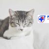Кастрация на женска котка с кръвни изследвания, които включват : Пълна кръвна картина и 10 показатели на вътрешни органи от Ветеринарна клиника