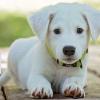 Поставяне на микрочип на куче + международен паспорт и въвеждане в електронната система от Ветеринарна клиника