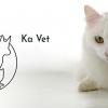 Кастрация на котарак от Ветеринарна клиника Ка Вет
