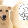 Почистване на зъбен камък със скалер ултразвук) от Ветеринарна клиника Ка Вет