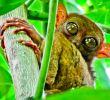Топ 10 животни с невероятни очи - част 1