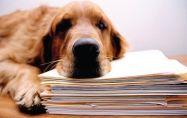Всичко от А до Я за регистрирането на куче