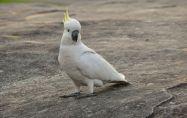 5 съвета за новите собственици на екзотична птица