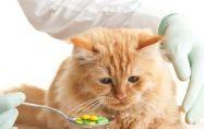 Котките и човешките лекарства