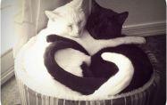 11 признака, че котката ви обича!
