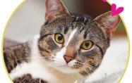 Привързани ли са котките към своите хора?