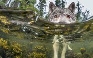 Морските вълци - един изцяло нов вид