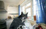 Нова котка: Неочаквани предимства