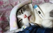 7-те признака, че котката ви е болна - част 1
