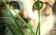 Защо котките ядат трева?