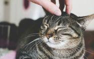 Как да накараш нова котка да те хареса?