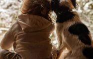 Най-хипоалергенните кучета: породи и видове