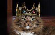 10-те най-скъпи породи котки