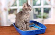 Котки: Дресировка и поведение