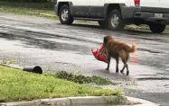 Куче в сърцето на бурята Харви с безпогрешен инстинкт за оцеляване