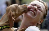 Защо кучетата са толкова приятелски настроени?