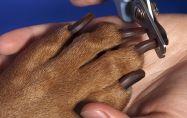 Как да изрязваме ноктите на кучетата си?