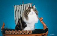 За викингите и котките