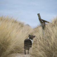 С куче на море: Напастта осили