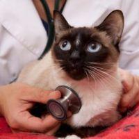 7-те признака, че котката ви е болна - част 2