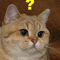 Как да повикате котката си?