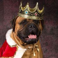 10-те най-скъпи кучешки породи за 2017г.