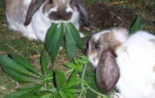 Употребяват ли наркотици дивите животни?