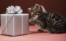 Подаръци!
