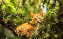 Трябва ли да гледам котката си на двора?
