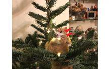 10 начина да преживеете Коледа с котка - част 1