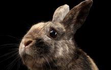Как да разсърдиш заек умерено?