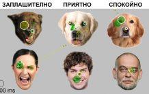 Как разчитат кучетата изражението на лицата ни.