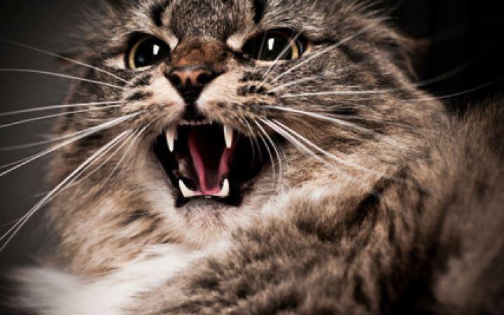 Когато котката побеснява спонтанно - Част 2
