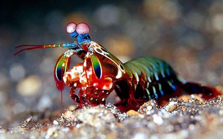 Топ 10 животни с невероятни очи - част 2